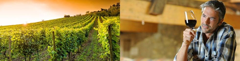 Codice sconto wineOwine